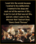 I went into the woods because I wanted to live deliberately. I wanted to live deep and suck out all the marrow of life... to put to rout all that was not life; and not, when I came to die, discover that I had not lived. - Henry David Thoreau